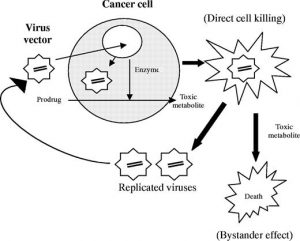 cancer as one of targeted diseases for gene therapy photo