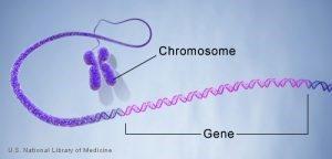 gene photo
